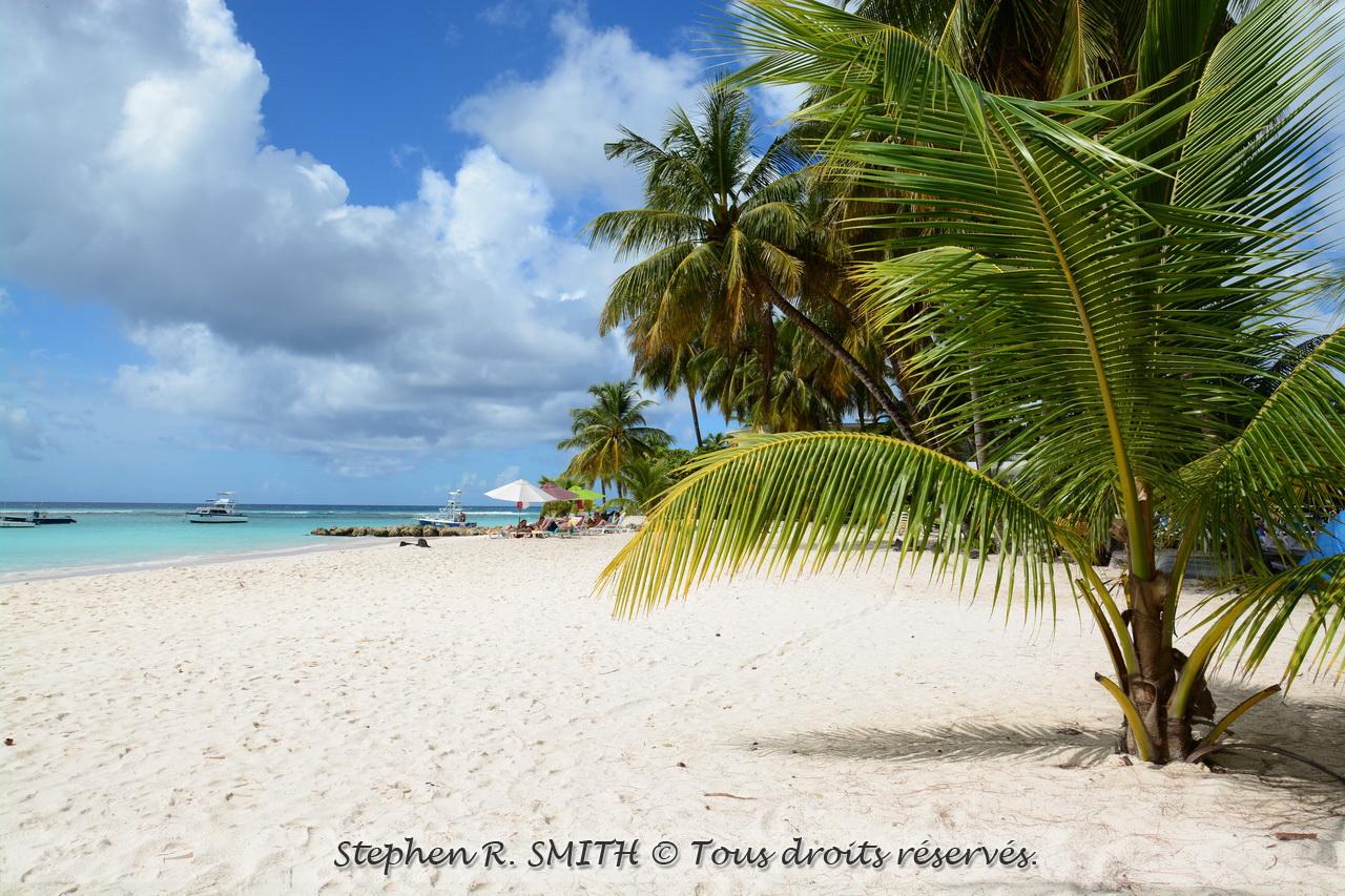 Une belle plage à la Barbade - 5 bonnes raisons de visiter la Barbade