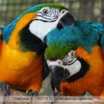 Barbados Wildlife Reserve — une réserve naturelle