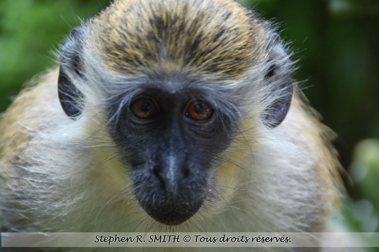 Attractionsà voir à la Barbade - Barbados Wildlife Reserve - www.labarbade.com