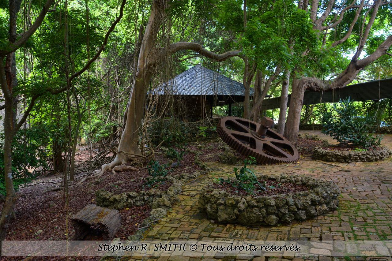 Que faire / voir à la Barbade - Barbados Wildlife Reserve - www.labarbade.com