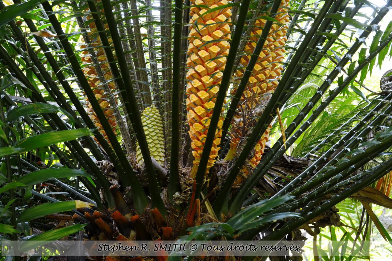Andromeda Gardens, jardin botanique à la Barbade / Attractions à la Barbade - www.labarbade.com